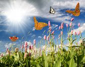 pic of hayfield  - flying butterflies in the flower meadow - JPG