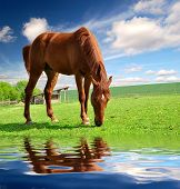 image of horse head  - horse in the meadow - JPG