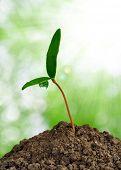 Постер, плакат: Растущий зелёное растение