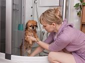The Girl Washes A Dog