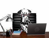 Dalmatian Dog In Glasses Is Doing Some Work On The Computer. Isolated On White Background poster