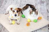 Dog and cat with easter eggs. Pets at home. poster