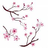 A Set Of Twigs Sakura Cherry Blossoms. Pink Cherry Flower Blossom Branch, Peach Bloom, Sakura Branch poster