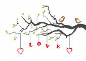 foto of heart shape  - Two love birds and love tree - JPG