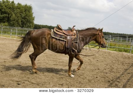 Male Horse With Saddle On His Back