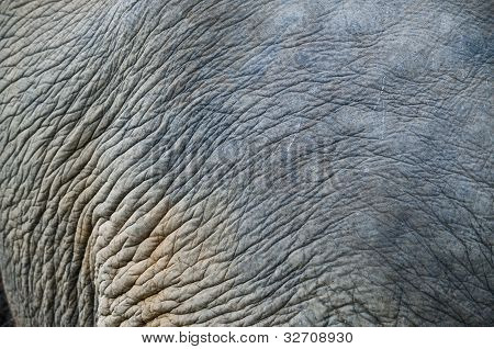 Close Up Elephant Skin