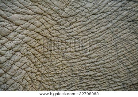 Close Up Elephant Skin