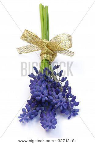 Bouquet Of Hyacinths