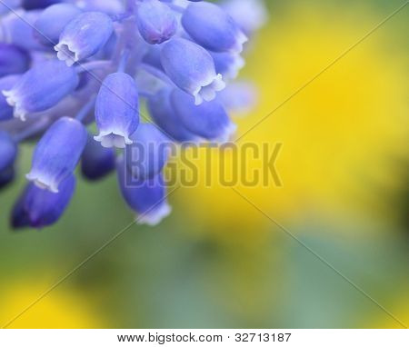 Background With Hyacinths
