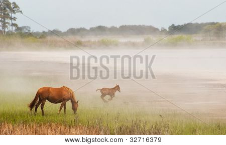 Chincoteague Pony And Foal