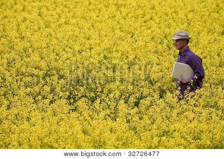 Farmer in a rapeseed field with his laptop