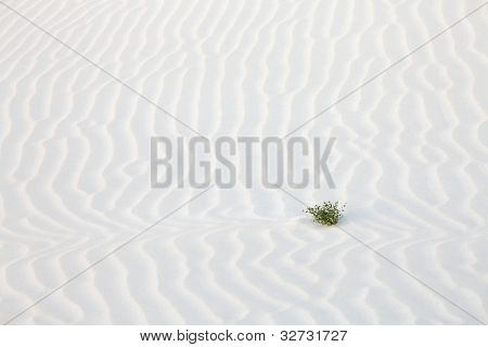 Sand desert surface,  white dunes of Socotra island