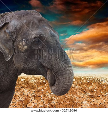 Elephant In The Desert