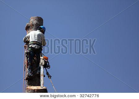 Tree TrimmerDangerous Jobs