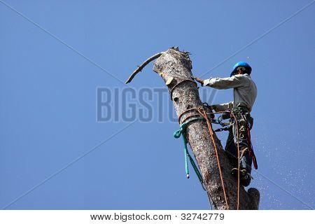 Dangerous Job Tree Removal