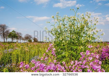 Colorful Landscape In Springtime
