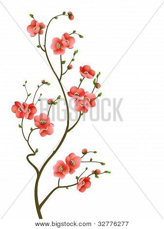 cherry blossom branch abstract background