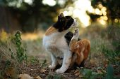 Cat Paw Scratches Behind The Ear. Fleas And Ticks In Domestic Animals. Kitty Sitting On The Grass Of poster