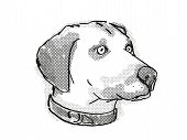 Retro Cartoon Style Drawing Of Head Of A Black Mouth Cur , A Domestic Dog Or Canine Breed On Isolate poster
