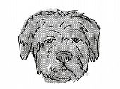 Retro Cartoon Style Drawing Of Head Of A Bouvier Des Flandres   , A Domestic Dog Or Canine Breed On  poster