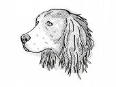 Retro Cartoon Style Drawing Of Head Of An English Springer Spaniel, A Domestic Dog Or Canine Breed O poster