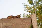 Close-up Of A Ginger Cat Lying At A Concrete Fence. The Cat Lies On The Fence. A Cat Is Resting Near poster