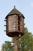 foto of pigeon loft  - Wooden rural dovecote with several pigeons on it - JPG