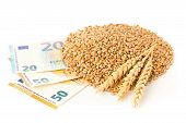 Heap Of Wheat Kernels With Wheat Ears On Euro Banknotes Over White Background - Wheat Cost Or Prize  poster