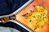 Autumn Maple Leaf Is Visible From The Zipper. Texture Of A Maple Leaf On Autumn Gold Background Of B poster