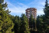 Forest Canopy Tower And Walkway, Footpath Above Treetops, Outdoor Adventure On Rogla, Slovenia poster