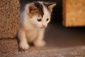 White Little Kitten With Brown Spots. Cute Kitty Closeup Portrait Outdoor. Little Hunter. poster