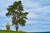 One Big Pine Tree Next To One Small Shrub Against The Empty Blue Sky With The Horizon poster