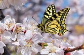 stock photo of single flower  - Butterfly and white flower - JPG