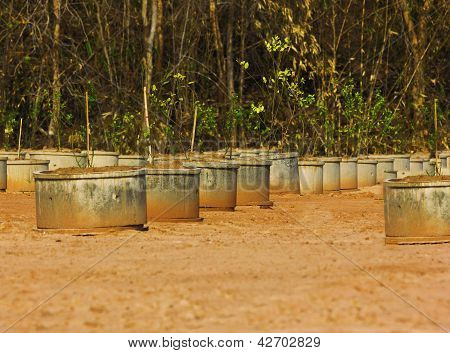 square concrete trees  pot exposing isolated