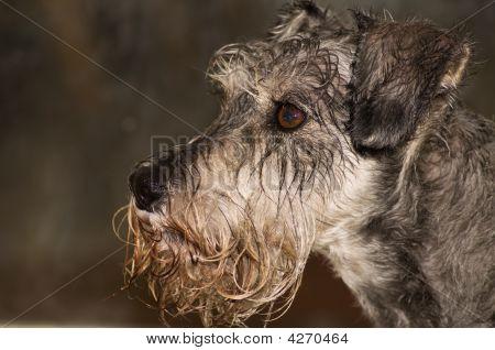 Wet Dog Profile