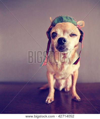 "a chihuahua winking ""i love you"""