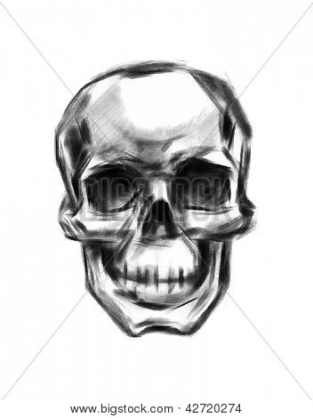 Skull. Hand drawn. Vector.
