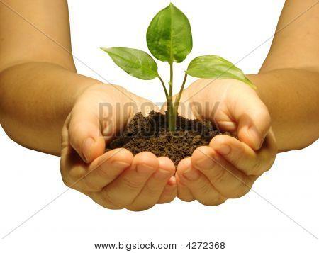 Anlage In Händen