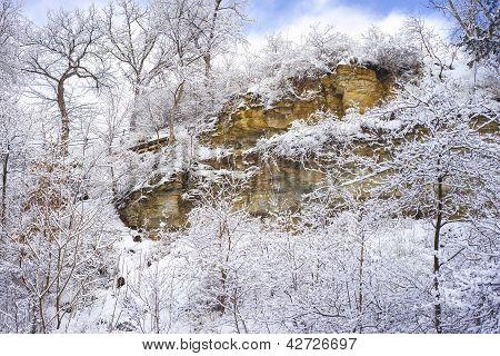 Snow Flocked Trees, Limestone Cliff