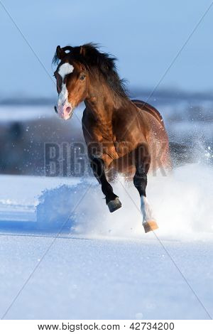 Horse running across the field in winter.