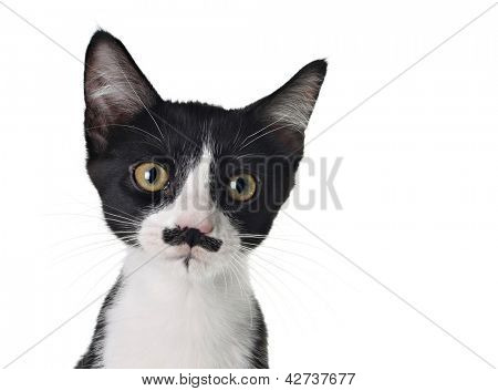 Cute black and white kitten with a mustache.