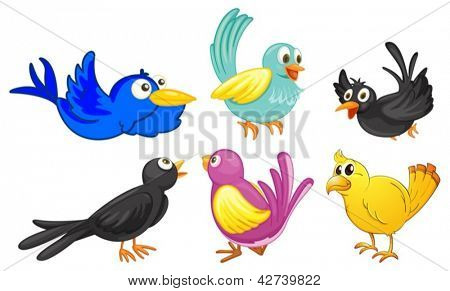 Illustration of birds with different colors on a white background