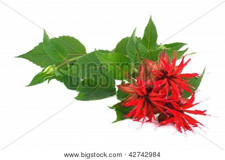 Bouquet red Ruta