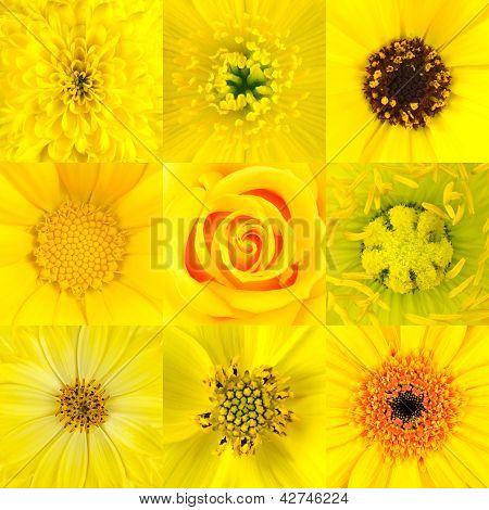 Collection Of Nine Yellow Flower Macros