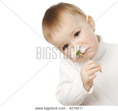 Cute Child Is Smelling Single Daisy