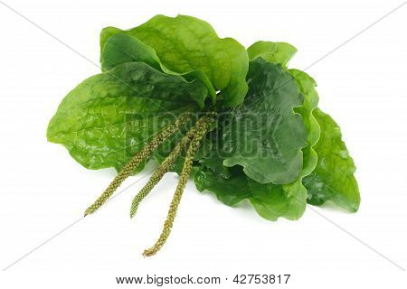 Plantain is isolated on a white