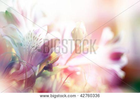 schöne Blumen, die mit Farbfilter