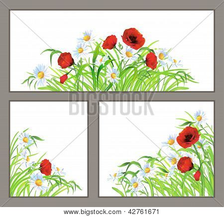 Set Summer Flower Poppy, Daisy Isolated On White