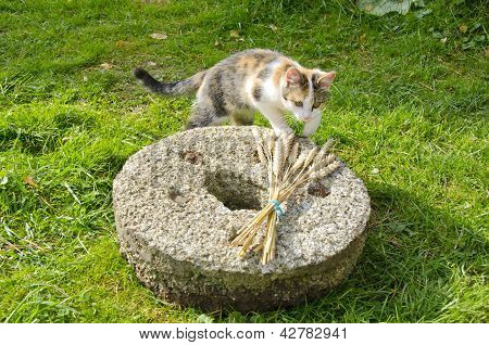 Young Cat On Old Millstone In Garden