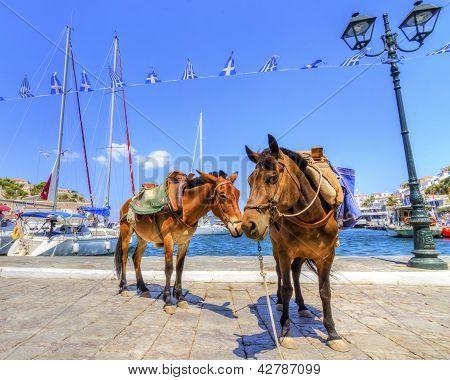 Esel auf der griechischen Insel